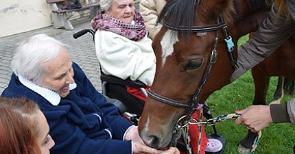 We had a wonderful visit at Sue Ryder – Lady the mare. Both she and our clients were delighted by the collective meeting.